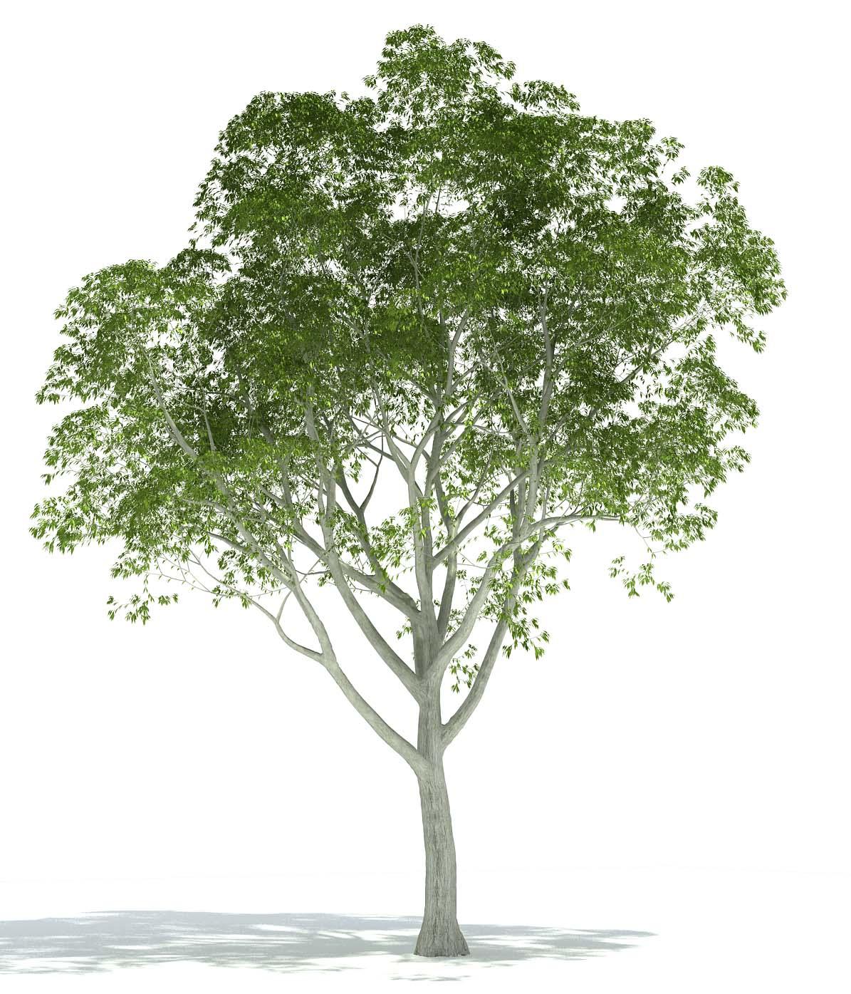 exlevel com plants library