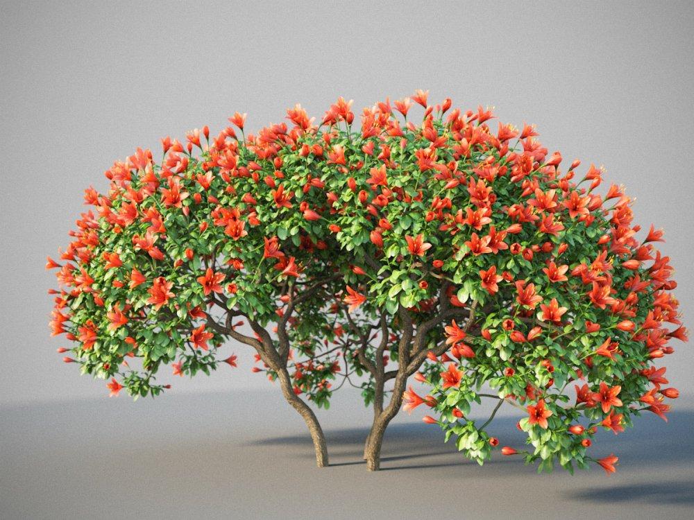 Rhododendron_j_09.jpg