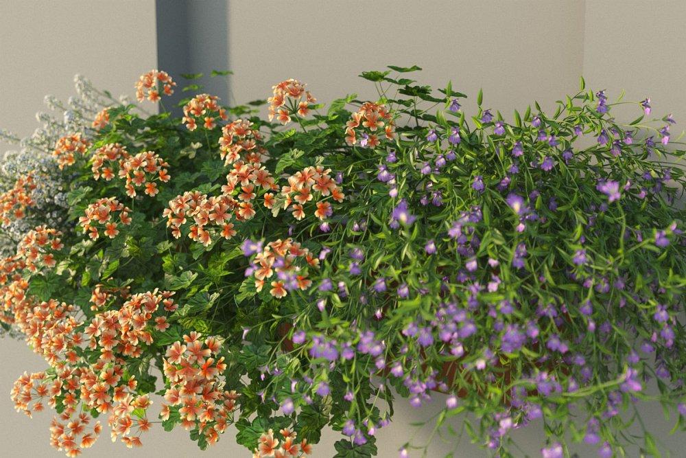 flower_test_19.jpg