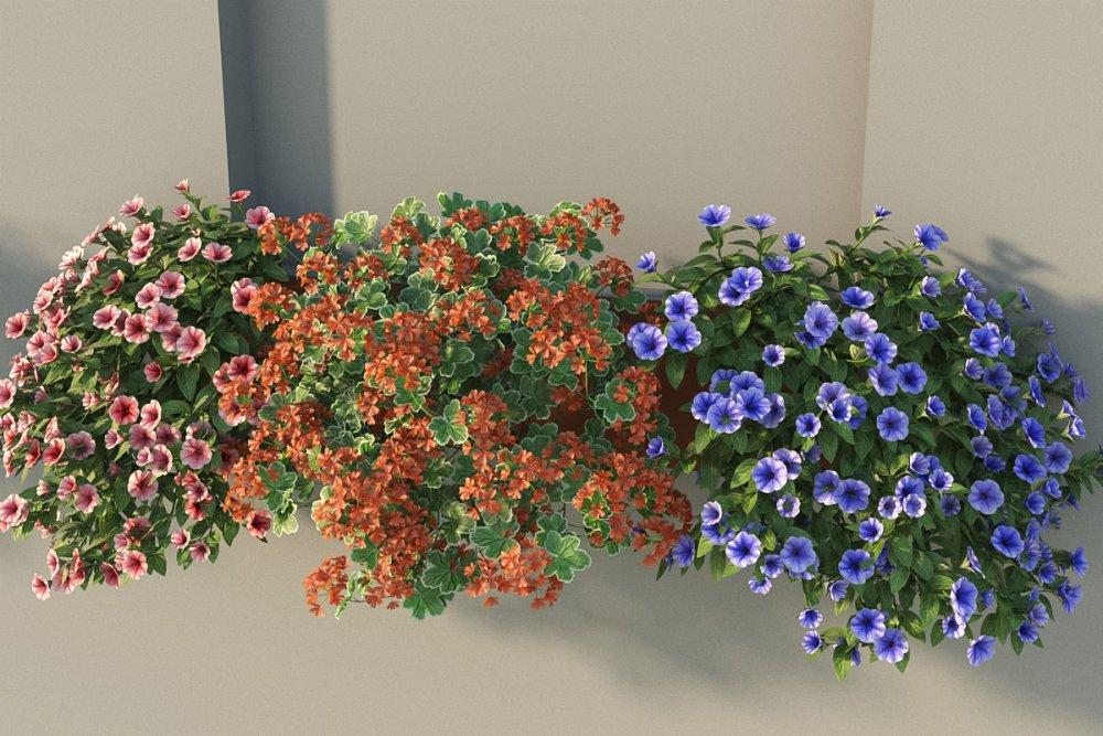 flower_test_20.jpg