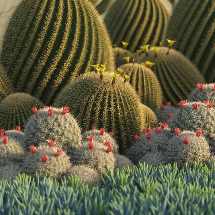 succulents_test_12.jpg