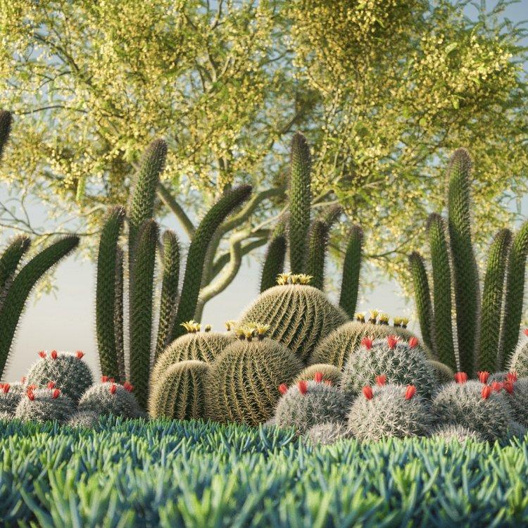 succulents_test_16.jpg