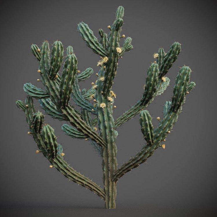 myrtillocactus_g 16.jpg