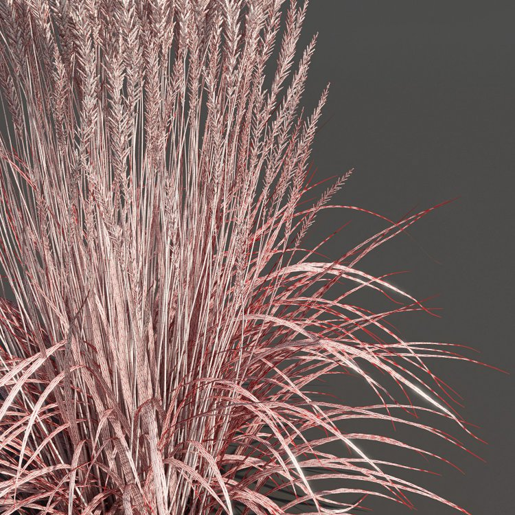 Feather_reed_grass___Wireframe.jpg