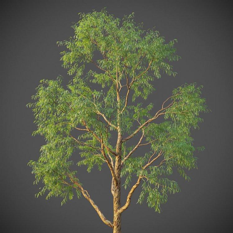 165045601_eucalyptus_g15.thumb.jpg.fd97db8d7101d900ec679539e9b95b47.jpg