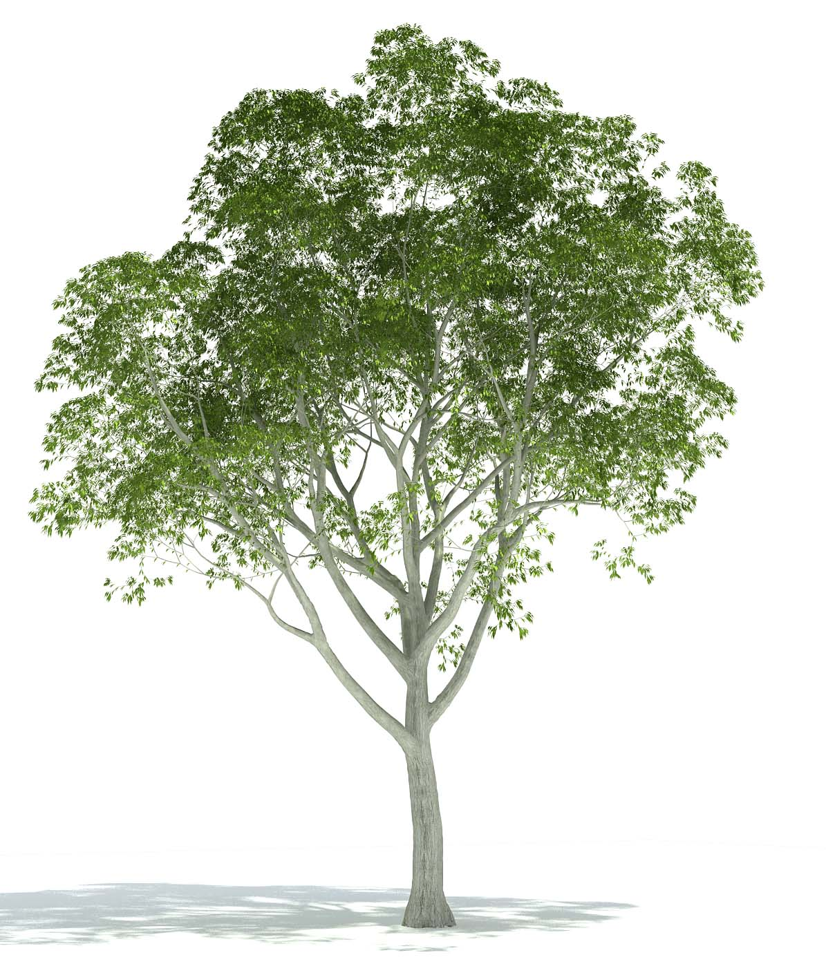 Exlevel com - Plants Library